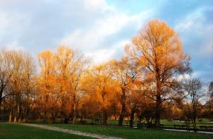 English Garden Winter Sun shining on the Trees