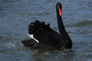 BlackSwan
