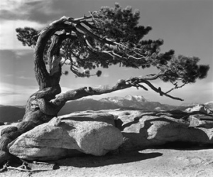 Ansel Adams  photographer and environmentalist