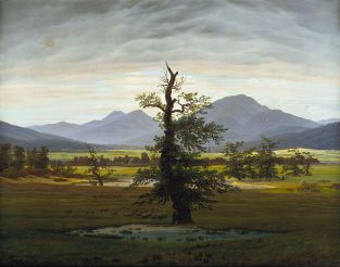 Caspar David Friedrich's The Solitary Tree